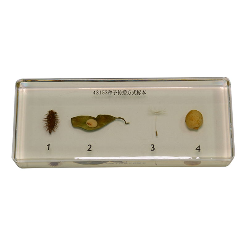 43153 植物种子传播方式标本
