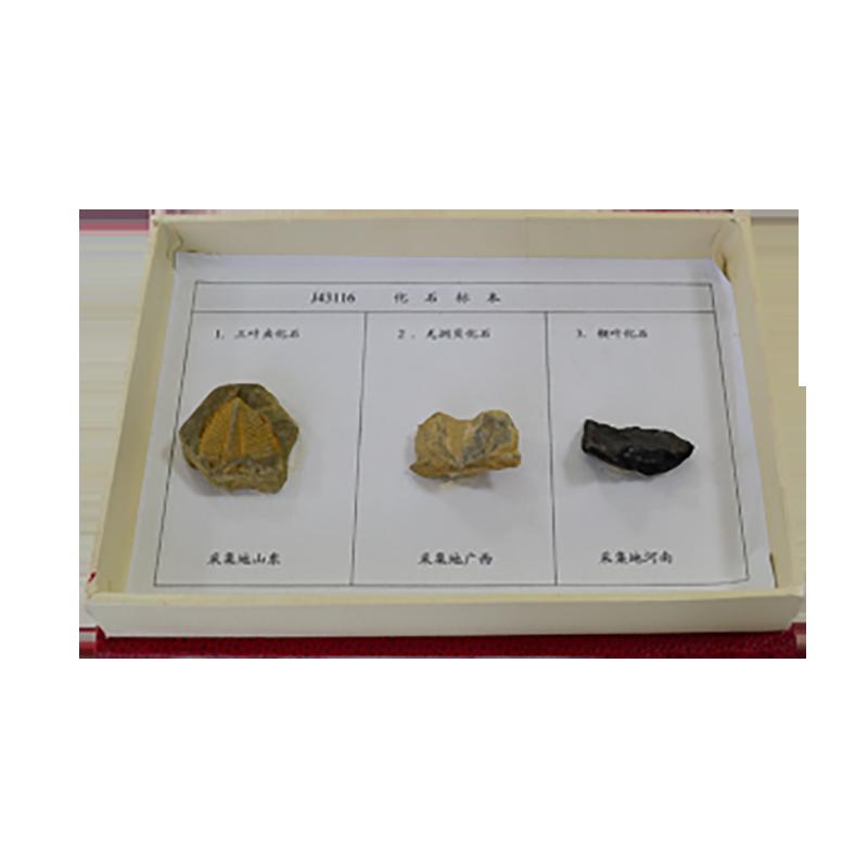 43116 化石标本