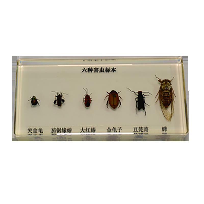 43150 昆虫标本