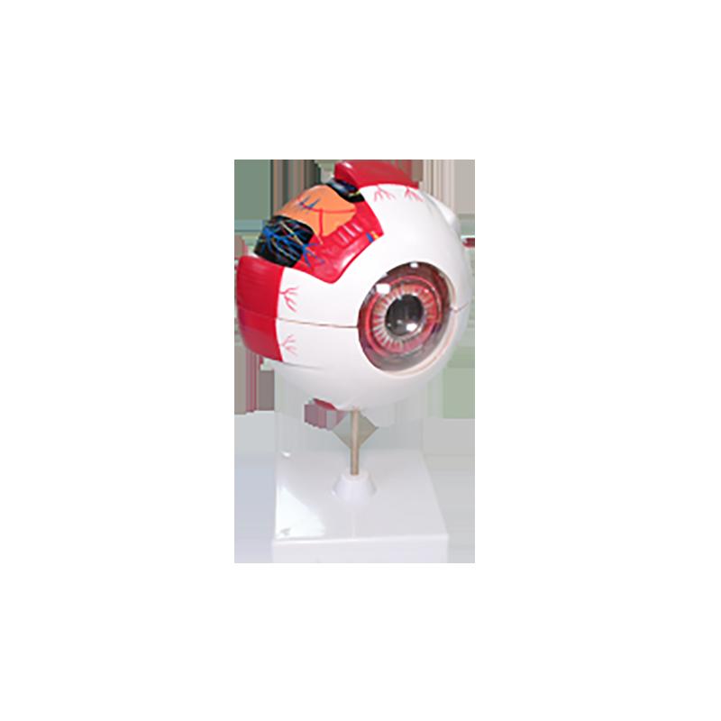 39054 眼构造模型
