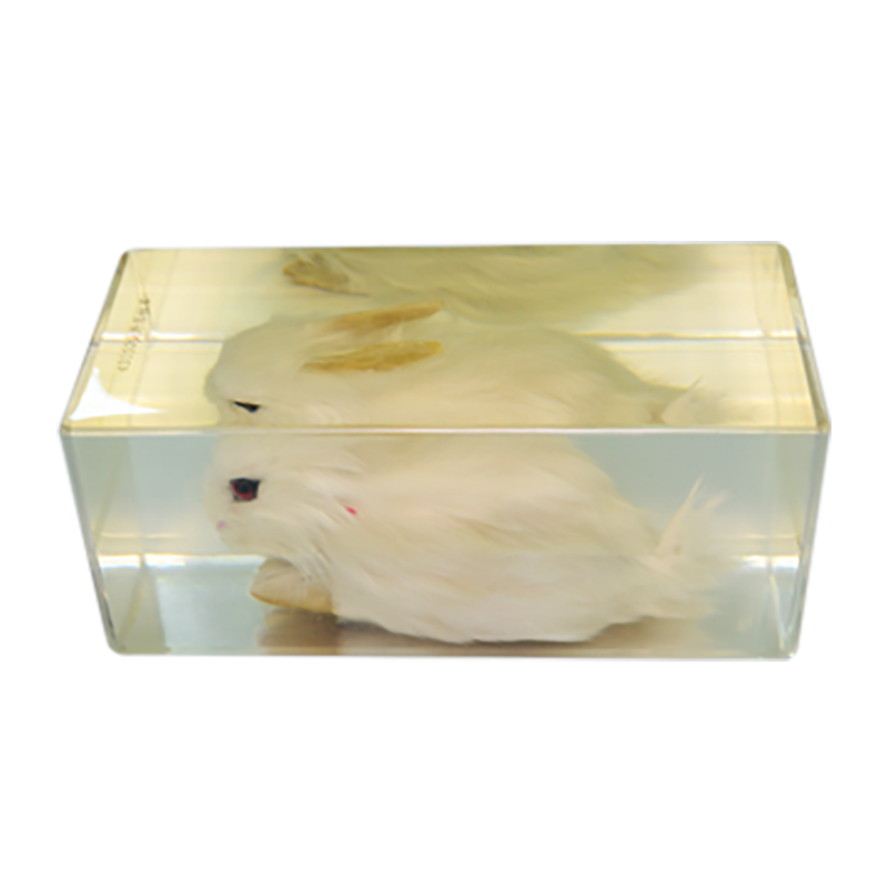 43152 兔外形标本